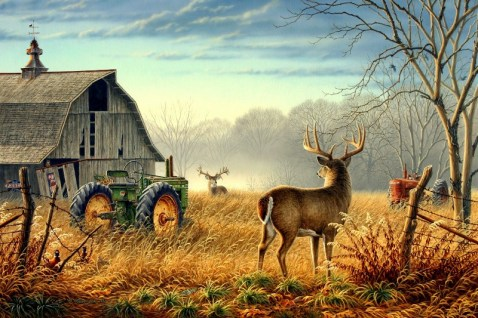Barn-birds-bucks-deer-farm-fence-field-fog-mist-design-2000x1333-pixel